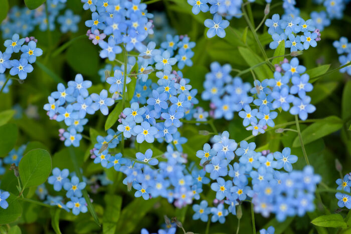 Forget Me(Him)Not…